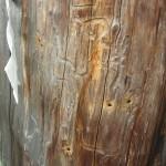 Nail marks from Ushinotoki-maiiri